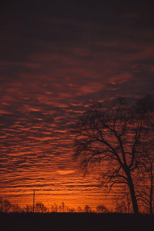 Δωρεάν στοκ φωτογραφιών με δέντρο, οπίσθιος φωτισμός, ουρανός, σκοτάδι