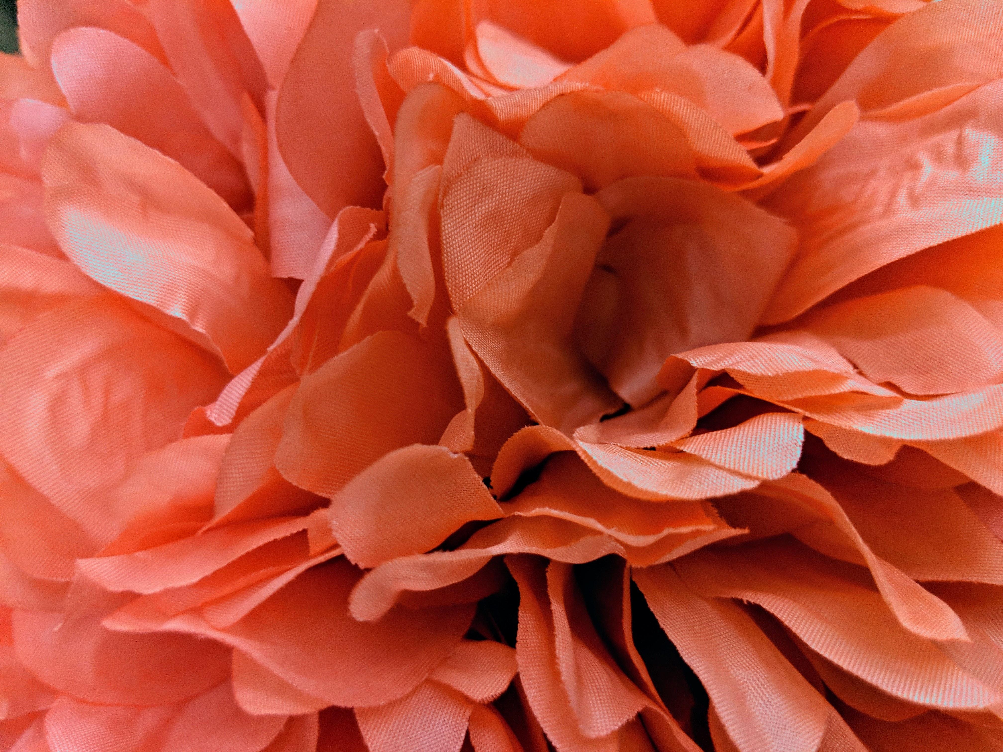 Free stock photo of close up flower, close up petals, flower art