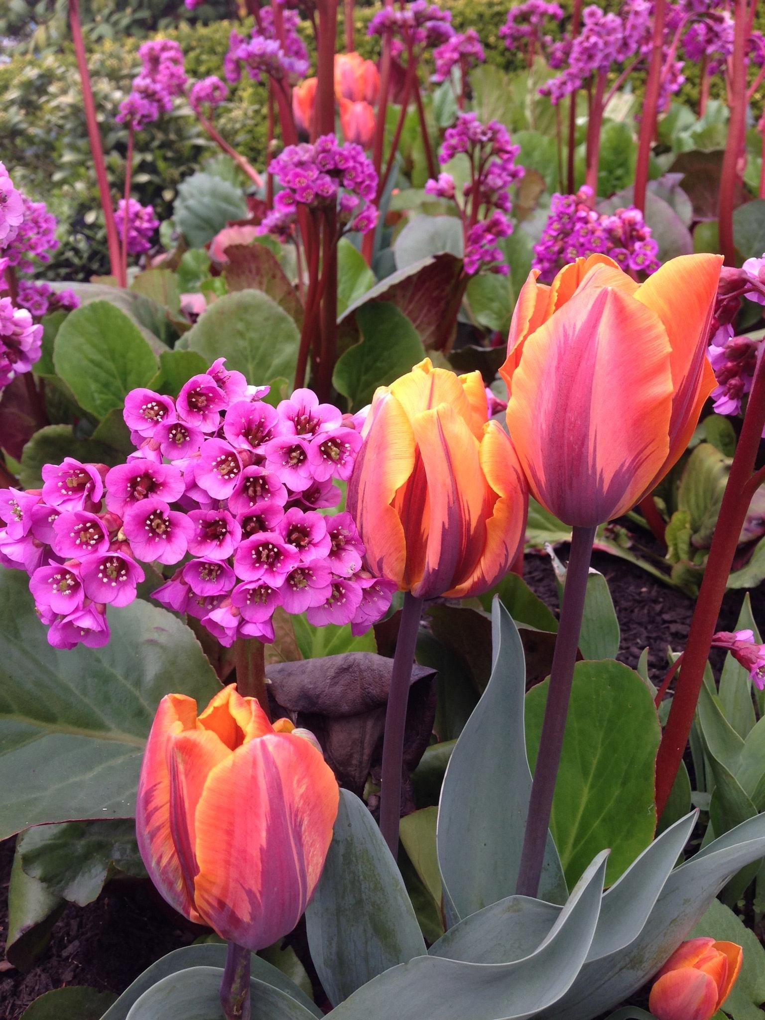 Kostenloses Foto zum Thema: frühling, frühlingsblumen, helle farben