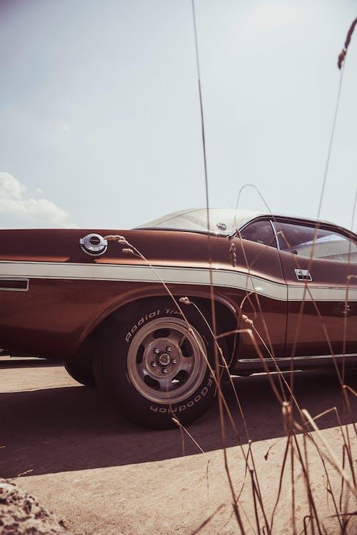 Kostnadsfri bild av bil, bil-, klassisk bil, muskelbil