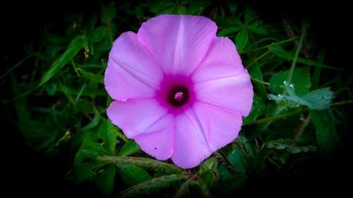 Kostnadsfri bild av blomma, blommor, elva fotografering, gräs