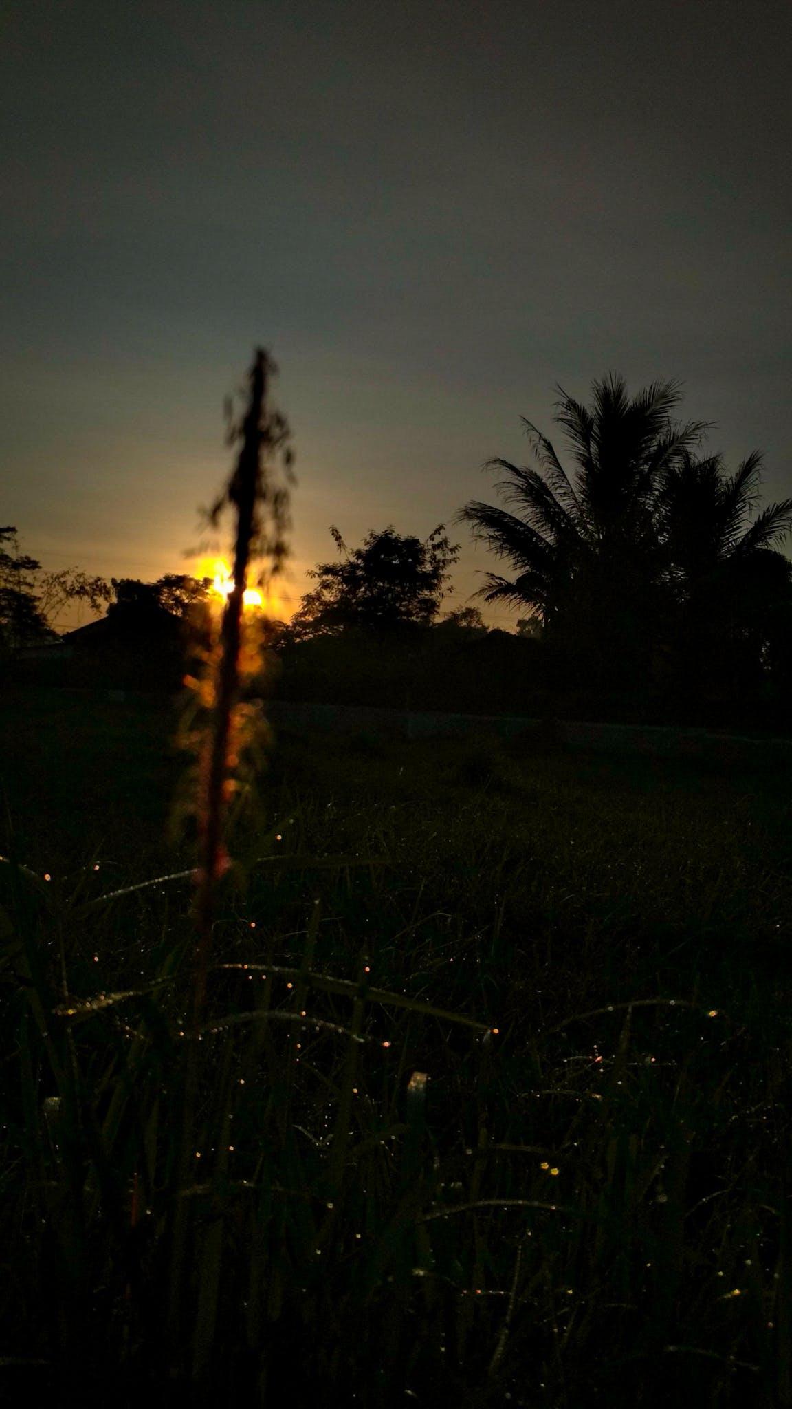black, blur, east java