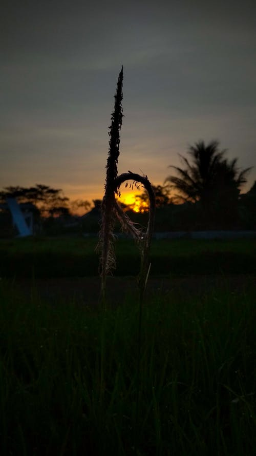 Kostnadsfri bild av elva fotografering, gräs, kreativ, lampa