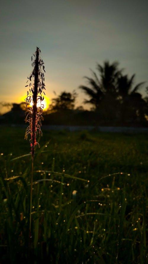 Kostnadsfri bild av elva fotografering, grön, gyllene sol, natur