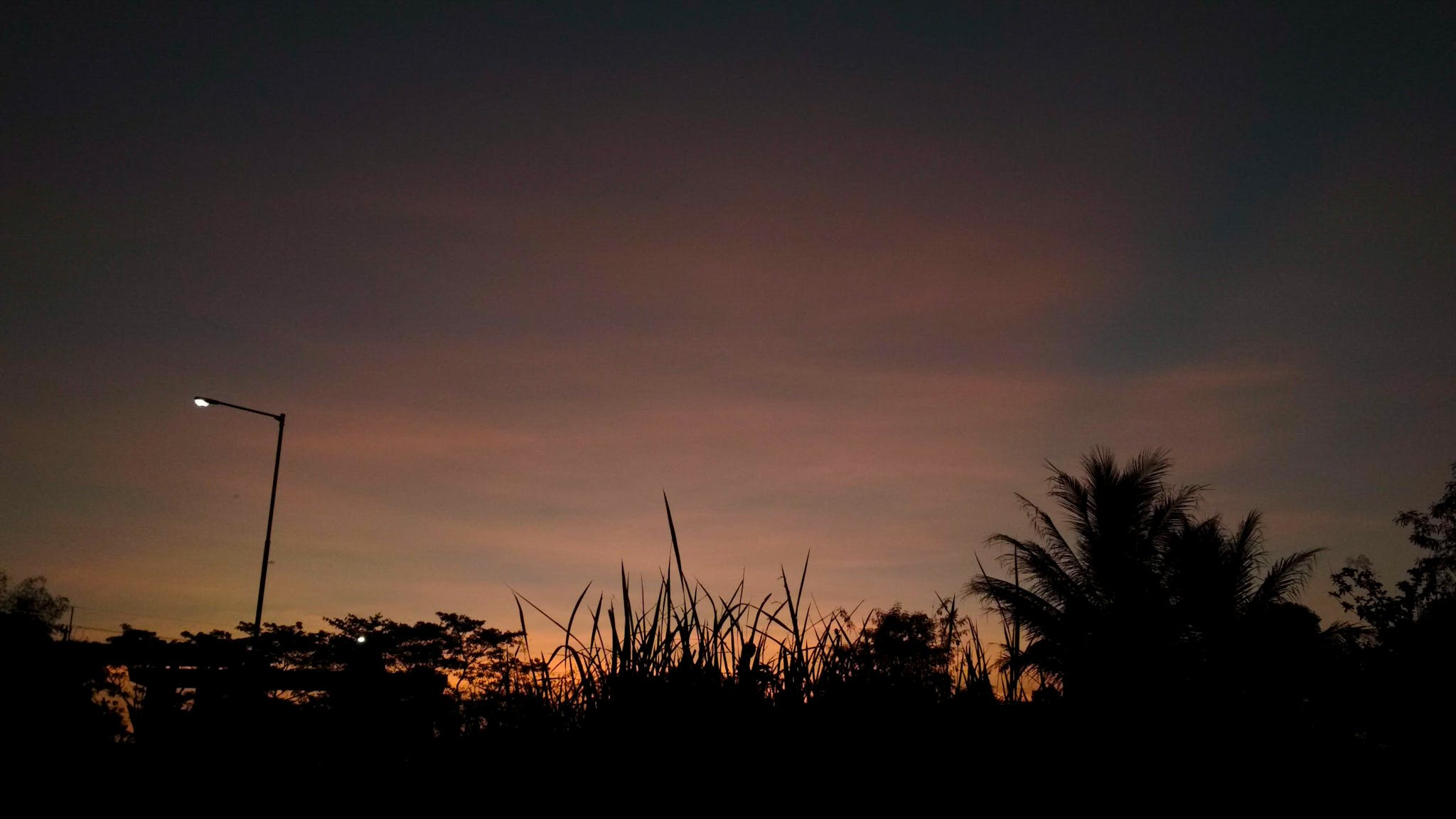 Free stock photo of black, east java, eleven photography, grass