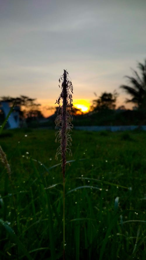 Kostnadsfri bild av elva fotografering, gräs, lampa, natur