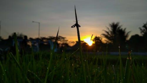 Kostnadsfri bild av elva fotografering, fjäril, gräs, insekt