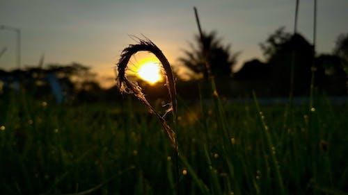 Kostnadsfri bild av elva fotografering, grön, gyllene sol, mitt objekt