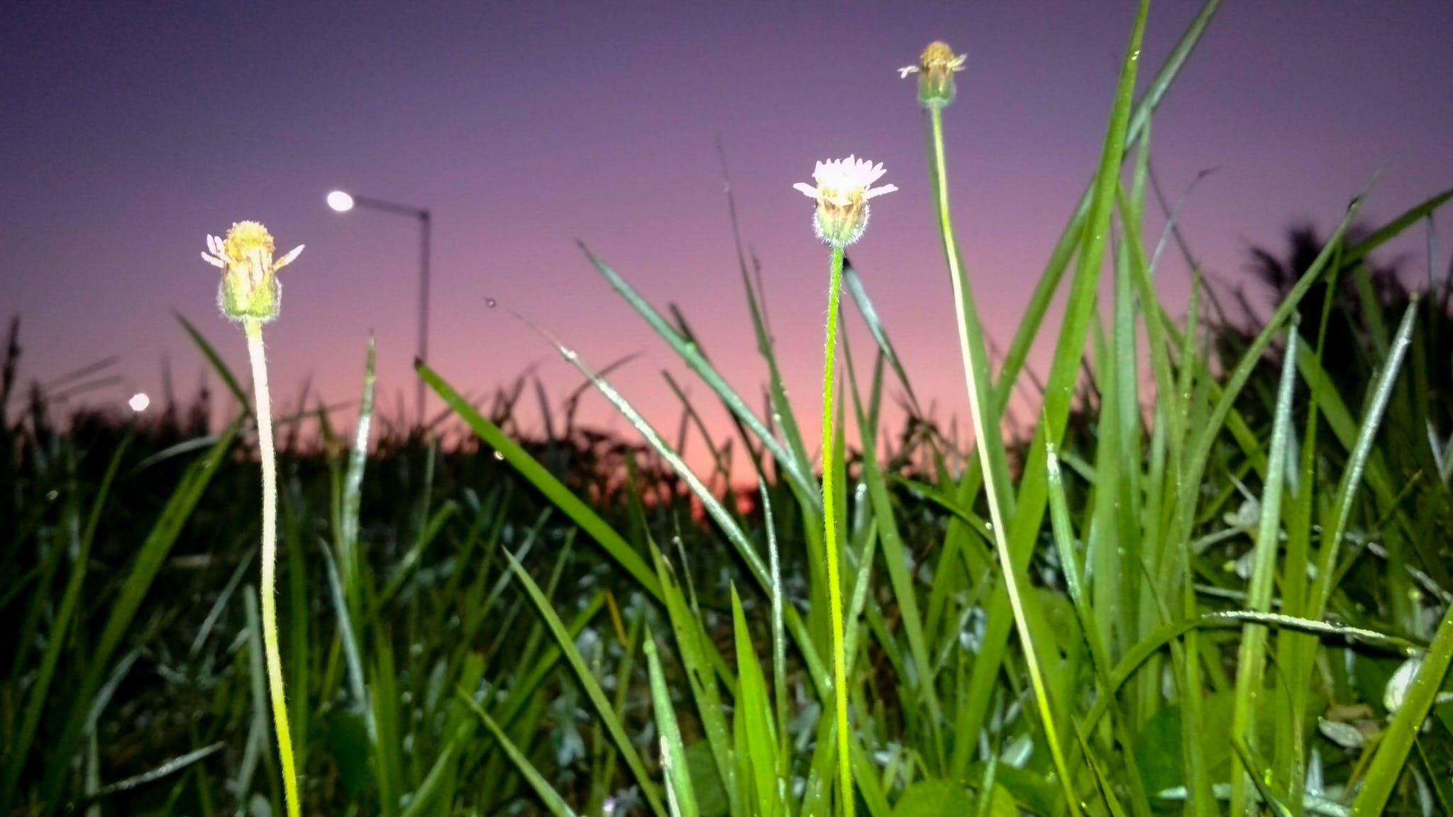 Free stock photo of east java, eleven photography, flash, flower