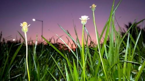 Kostnadsfri bild av blixt, blomma, elva fotografering, grön