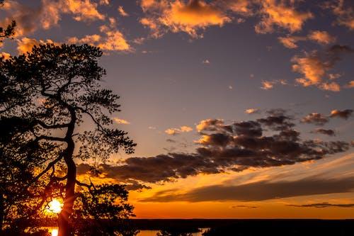 Kostenloses Stock Foto zu bäume, entspannung, hübsch, panoramablick