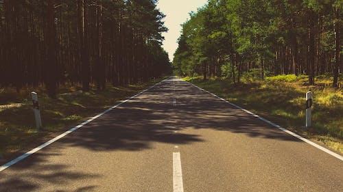 Foto d'estoc gratuïta de arbres, bosc, carretera, natura