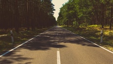 road, nature, forest