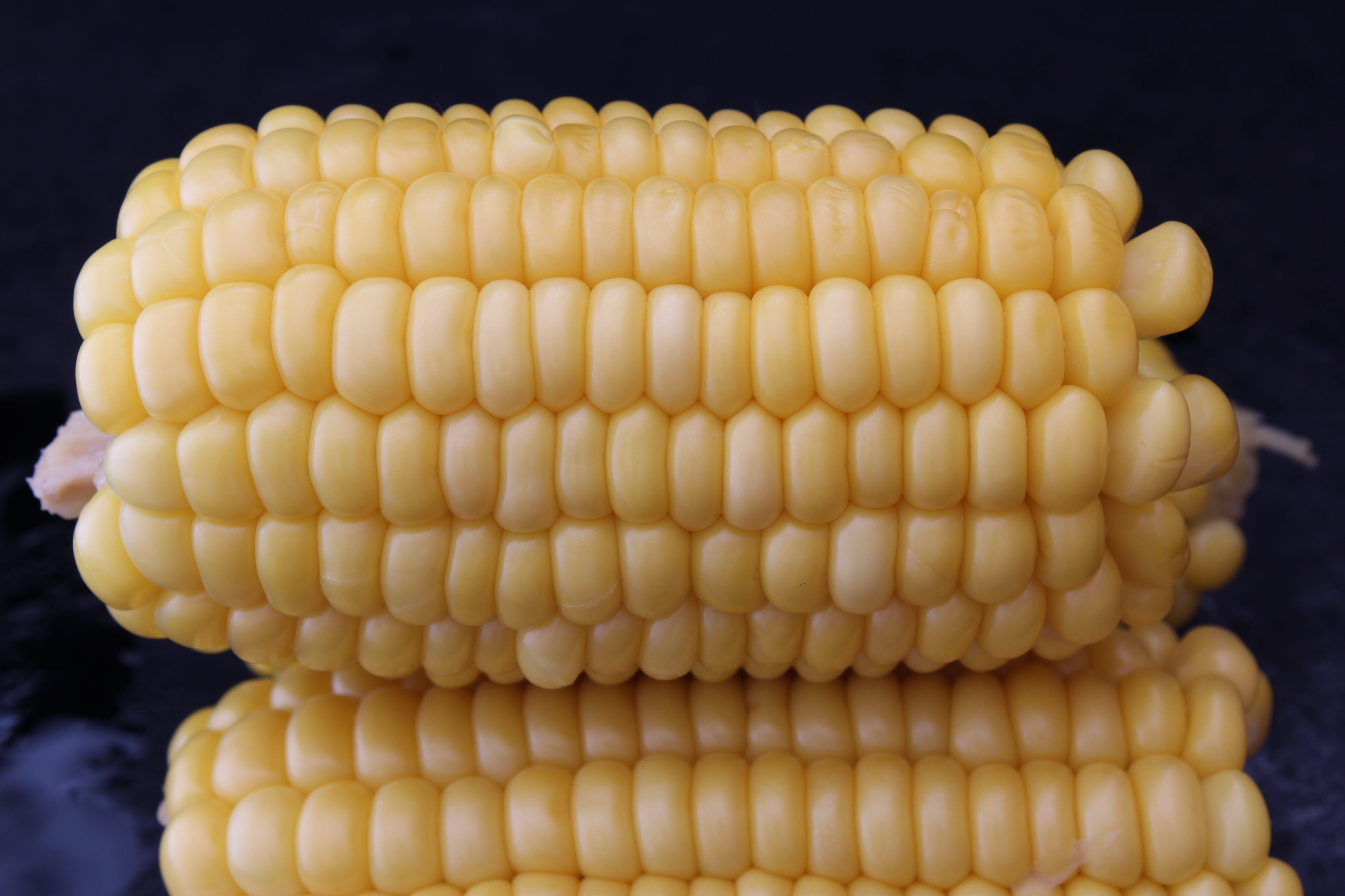 Free stock photo of black background, sweet corn