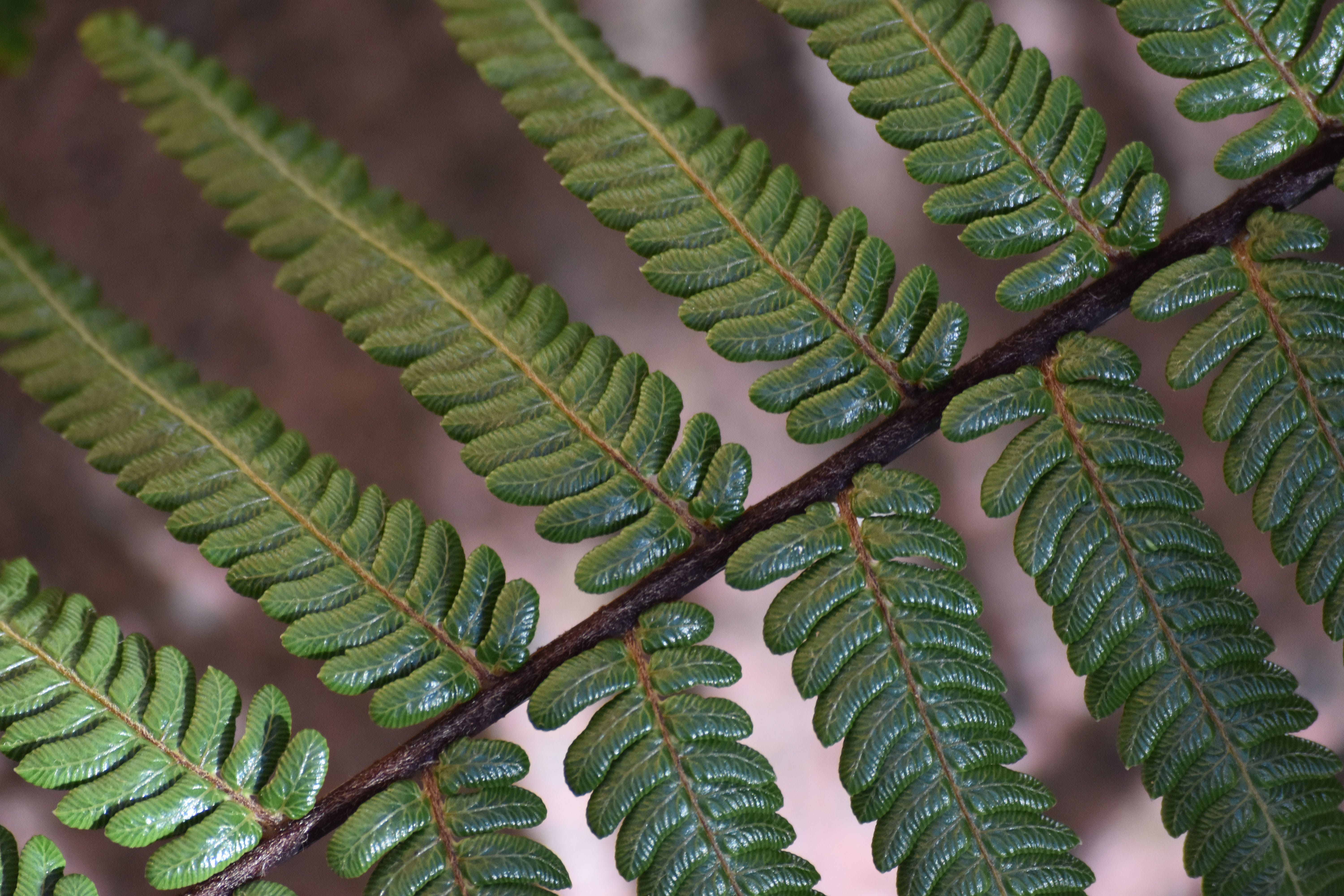 Free stock photo of green fern