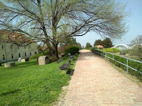 Бесплатное стоковое фото с petrovaradinska, дорожка, красивый, нови сад