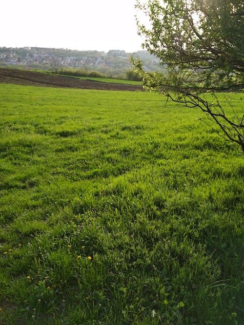 樹, 田, 綠色的田野 的 免费素材照片