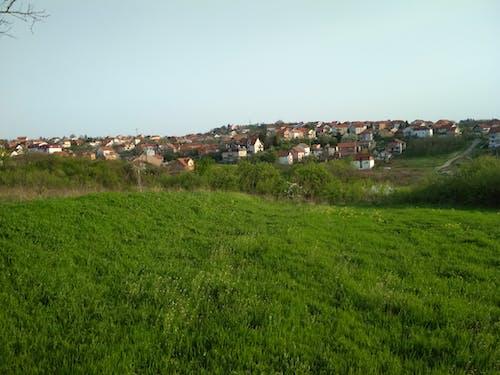 Бесплатное стоковое фото с дома, поле, сербия