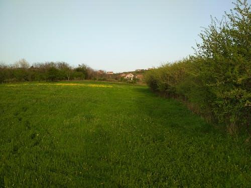 Бесплатное стоковое фото с деревья, красивый, поле, цветы