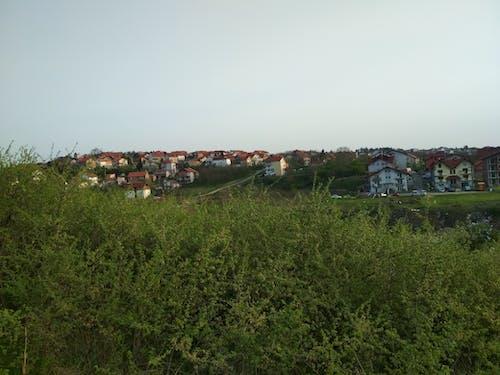 Бесплатное стоковое фото с деревья, дома, сербия