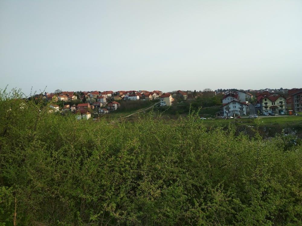 деревья, дома, сербия