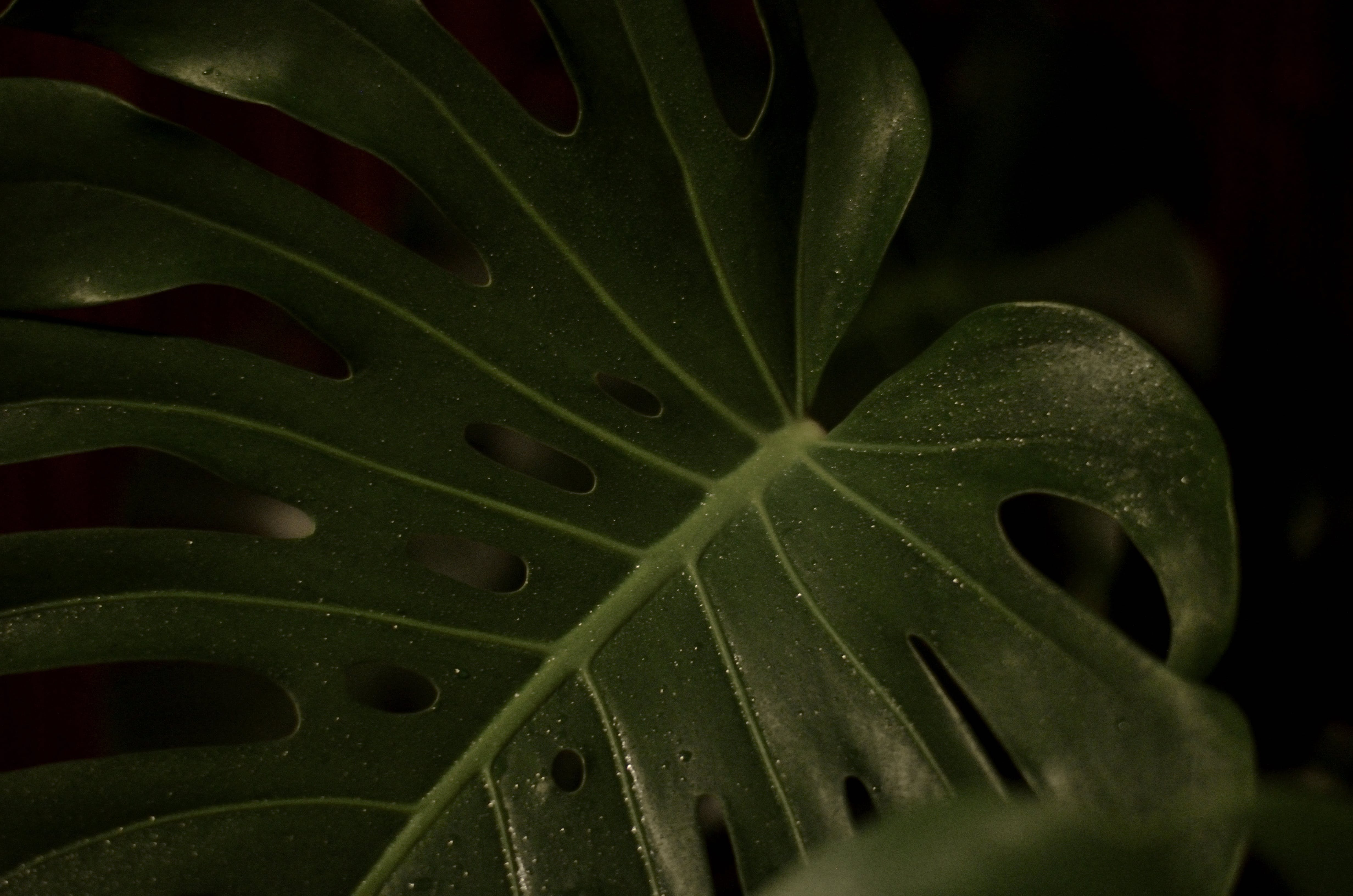 Closeup Photography of Green Heart Cut Leaf