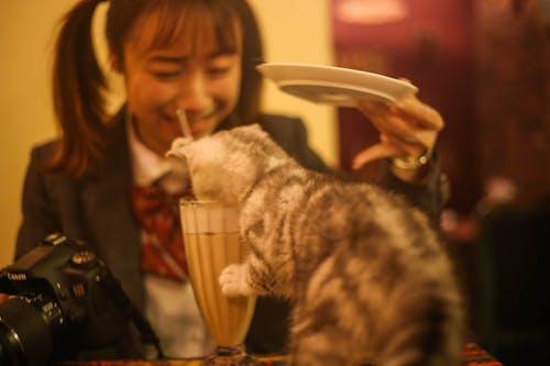Gratis lagerfoto af forkælet kat
