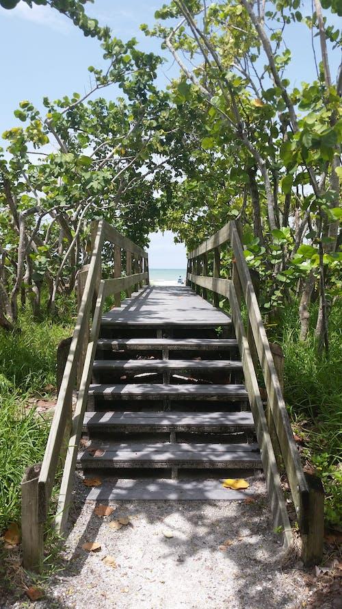 Immagine gratuita di alberi, atmosfera estiva, cielo azzurro, corallo del capo