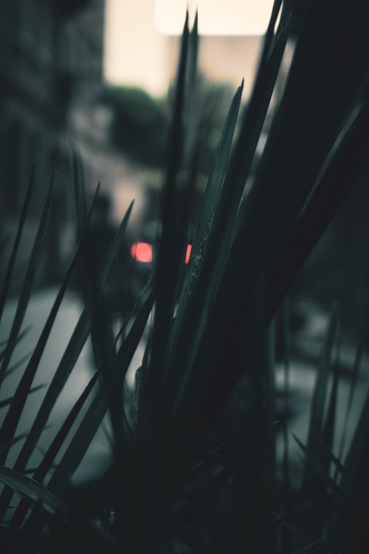 Free stock photo of dark, silhouette, plant, blur