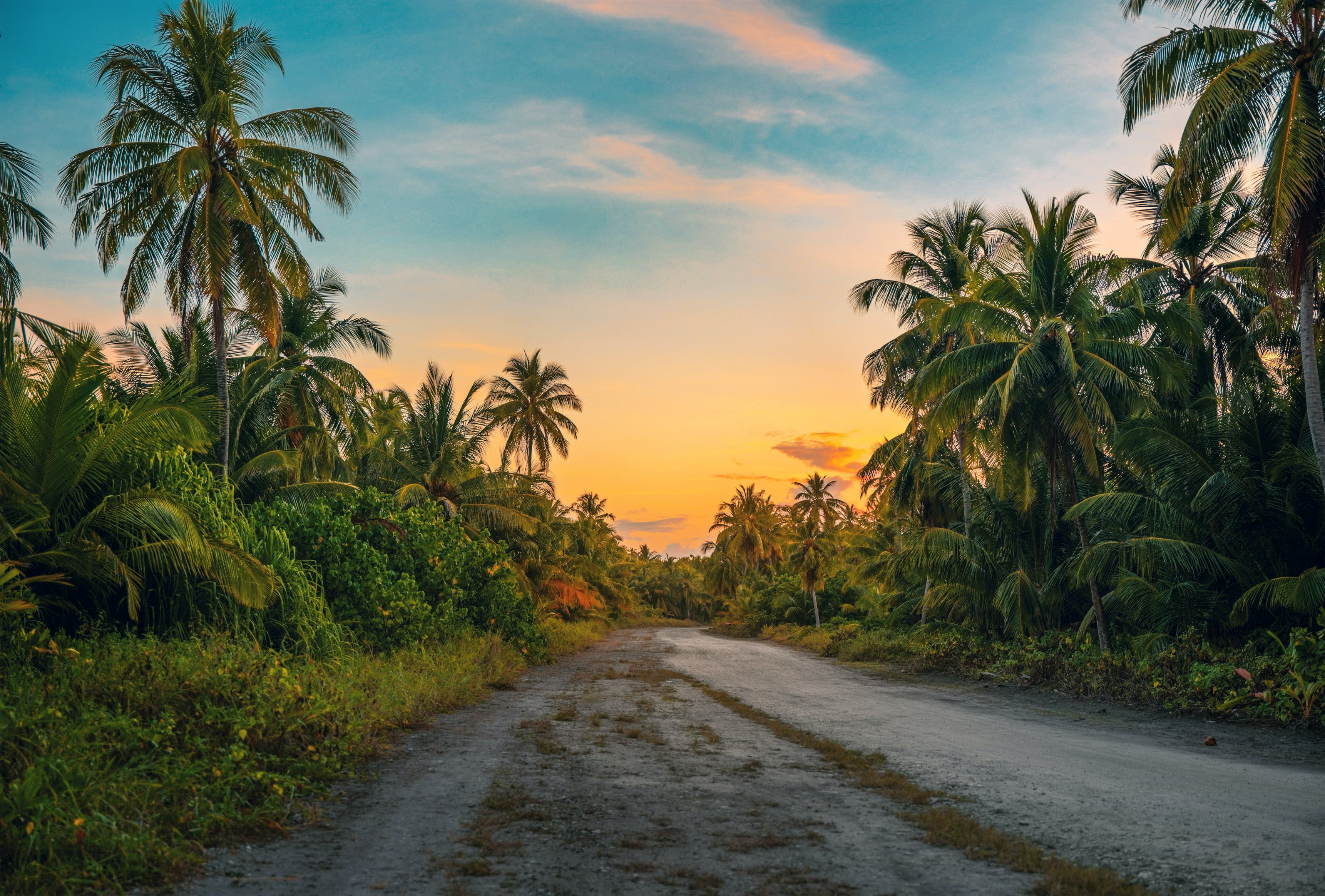 Photography of Dirt Road Surrounded by Trees