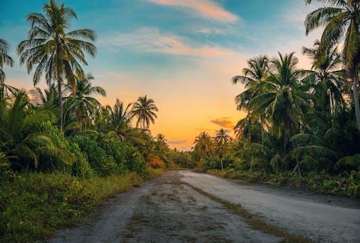 Tropical Island Beach Ambience Sound: 1000+ Interesting Tropical Photos · Pexels · Free Stock Photos