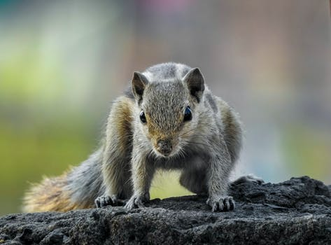 Close-up Photography of Chipmunk
