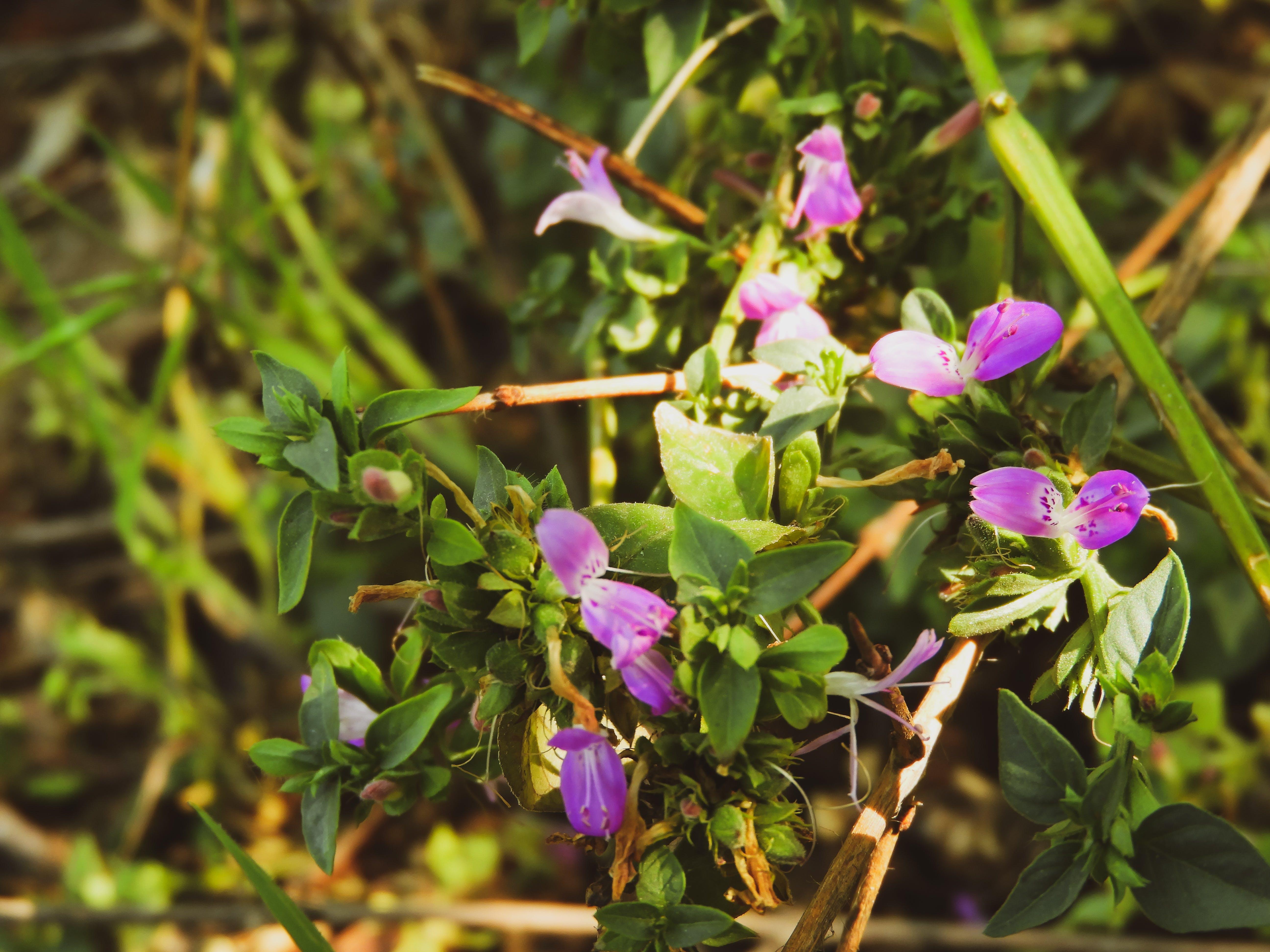 Kostenloses Stock Foto zu natürliche kombination von lila und grün