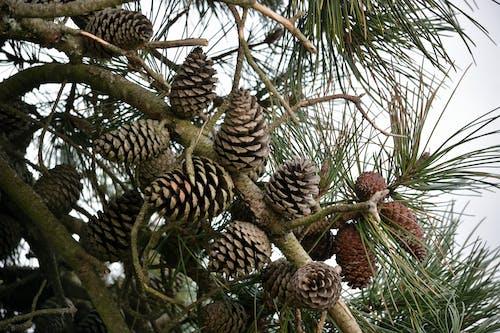 Darmowe zdjęcie z galerii z arbre, botanique, flore, gałąź