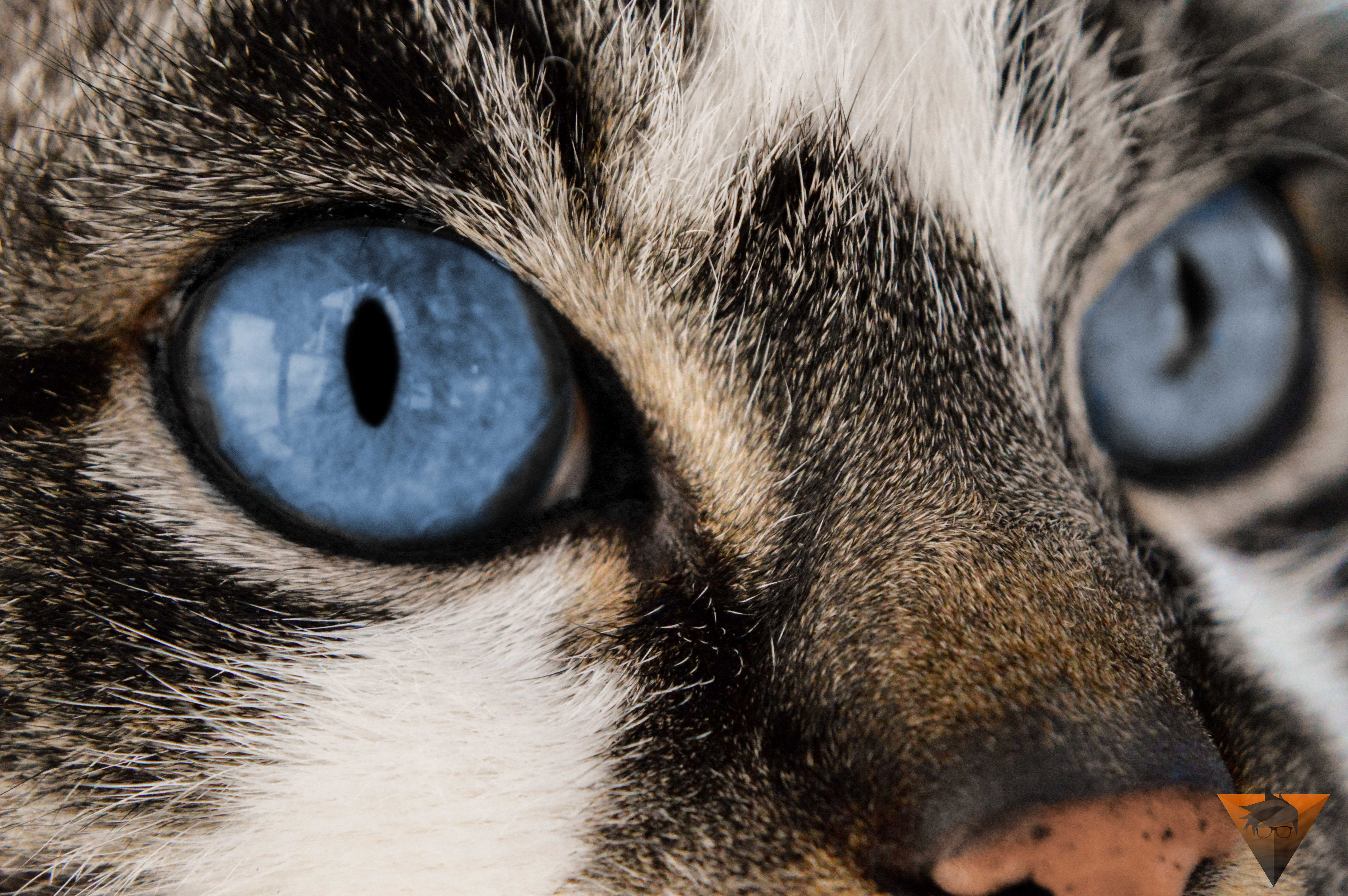 Close Up Photo Of Brown Tabby Cat 183 Free Stock Photo