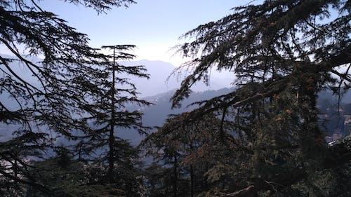 Immagine gratuita di albero, cielo, montagna