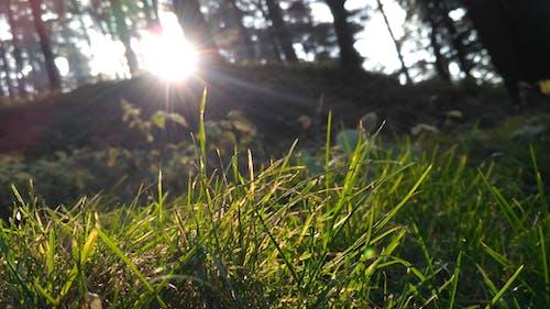 Immagine gratuita di erba, sole