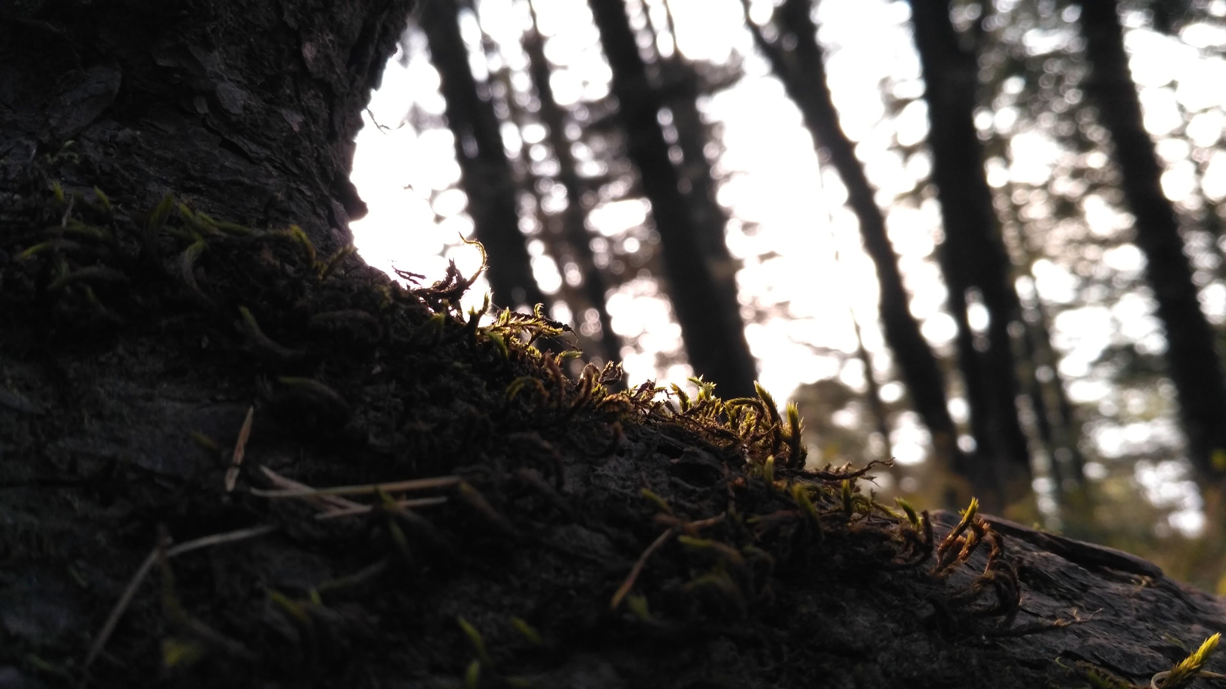 Gratis lagerfoto af mos, træ