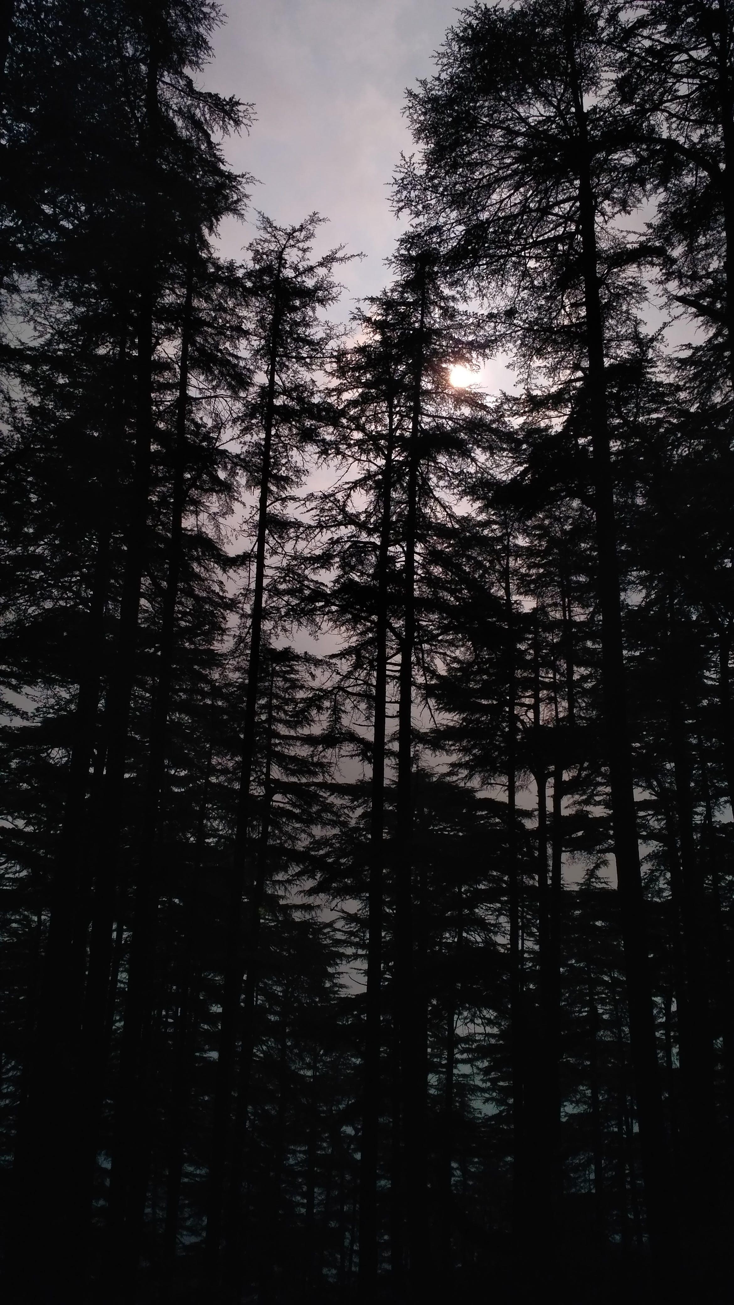 Gratis lagerfoto af høje træer, træer