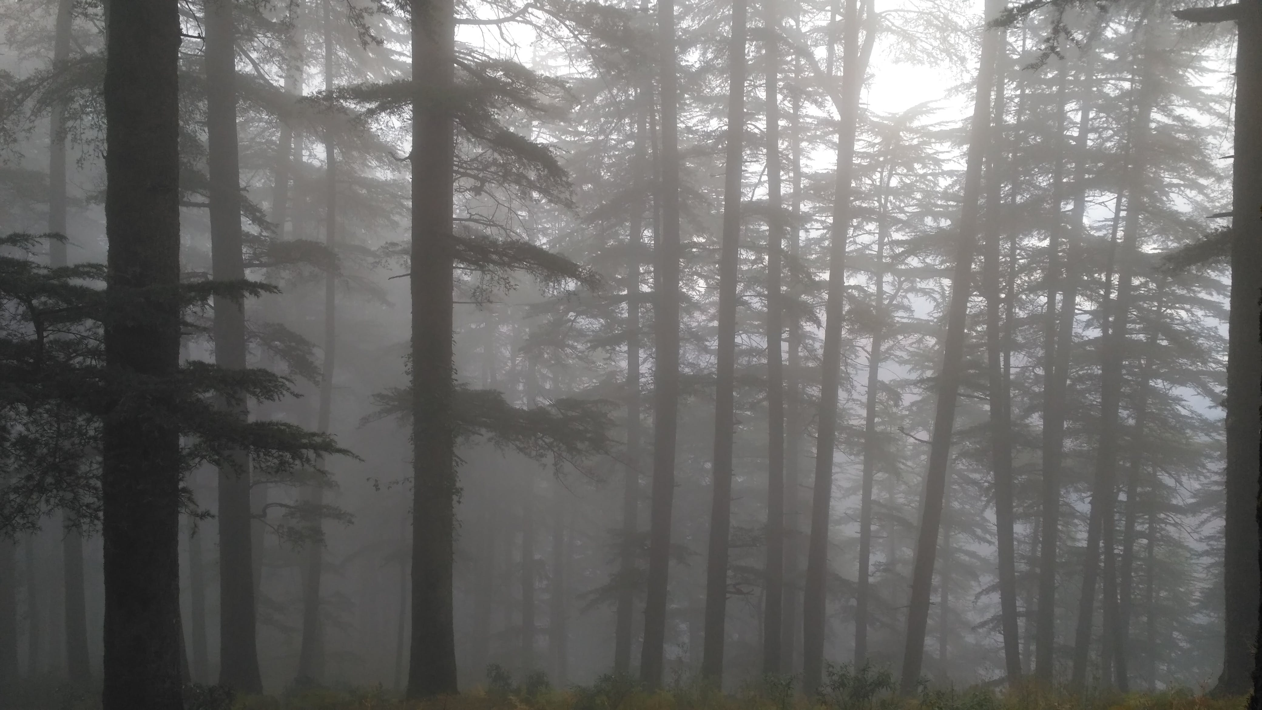 Free stock photo of foggy, forest