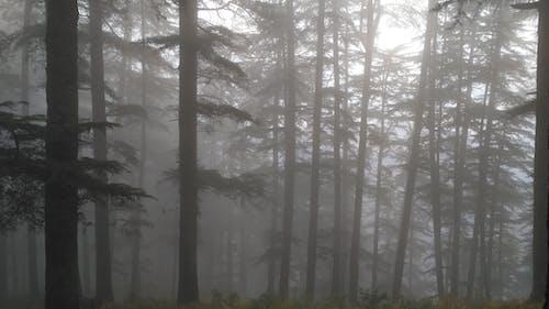 Immagine gratuita di foresta, nebbioso