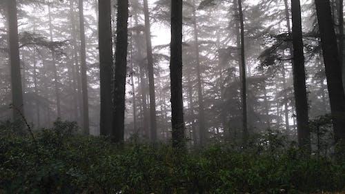Immagine gratuita di foresta, nebbia, nebbioso