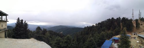 Immagine gratuita di foresta, panorama