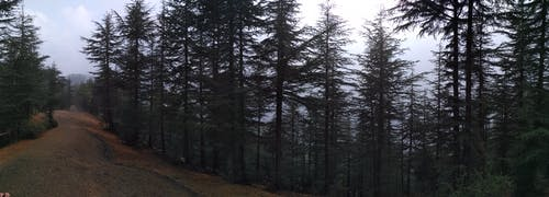 Immagine gratuita di foresta, montagna, panorama