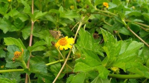 Immagine gratuita di falena, fiore, impianto