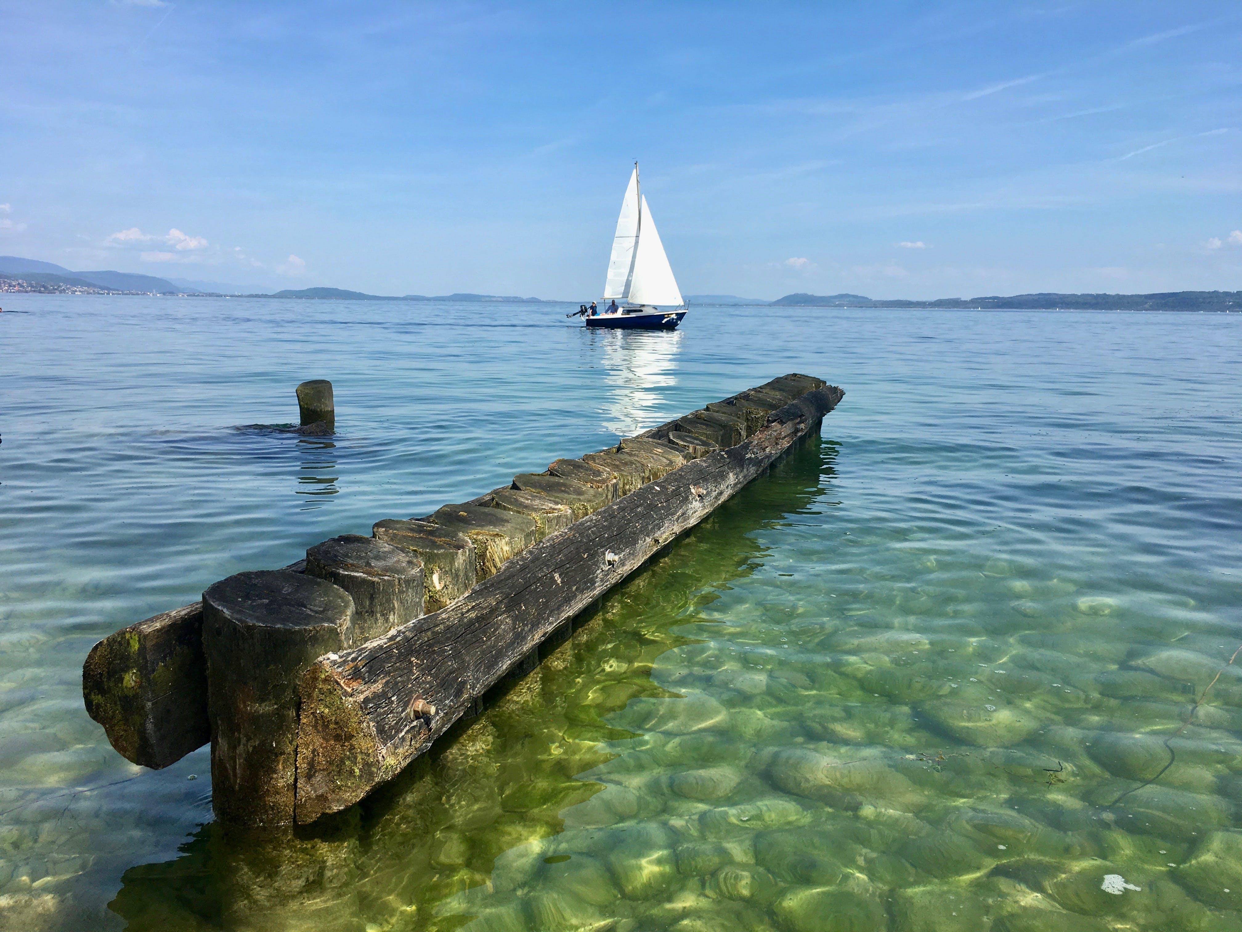 Free stock photo of lago, velero