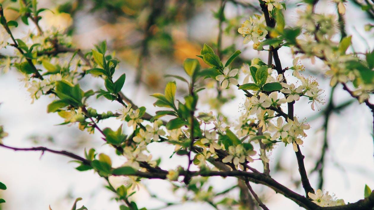 árvore, atraente, aumento