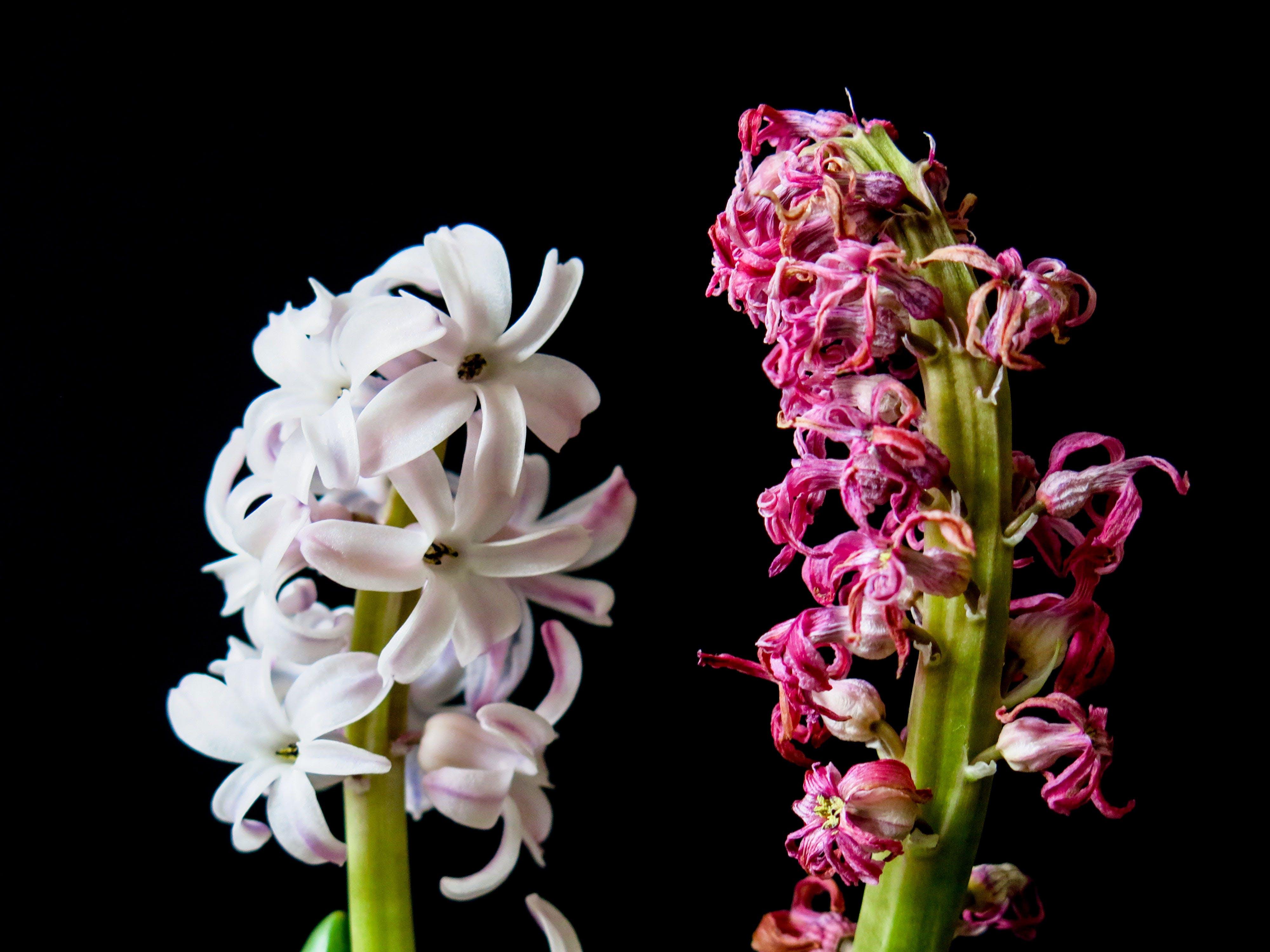 Základová fotografie zdarma na téma barva, fialové orchideje, flóra, jasný