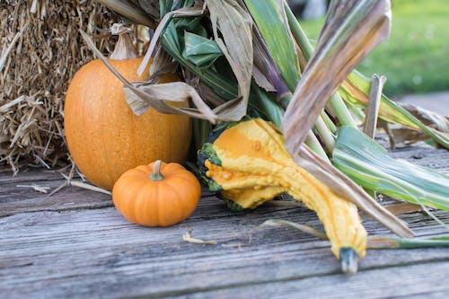 Free stock photo of corn, farm, gourd, halloween
