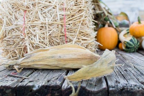 Безкоштовне стокове фото на тему «апельсин, гарбуз, Деревина, кукурудза»